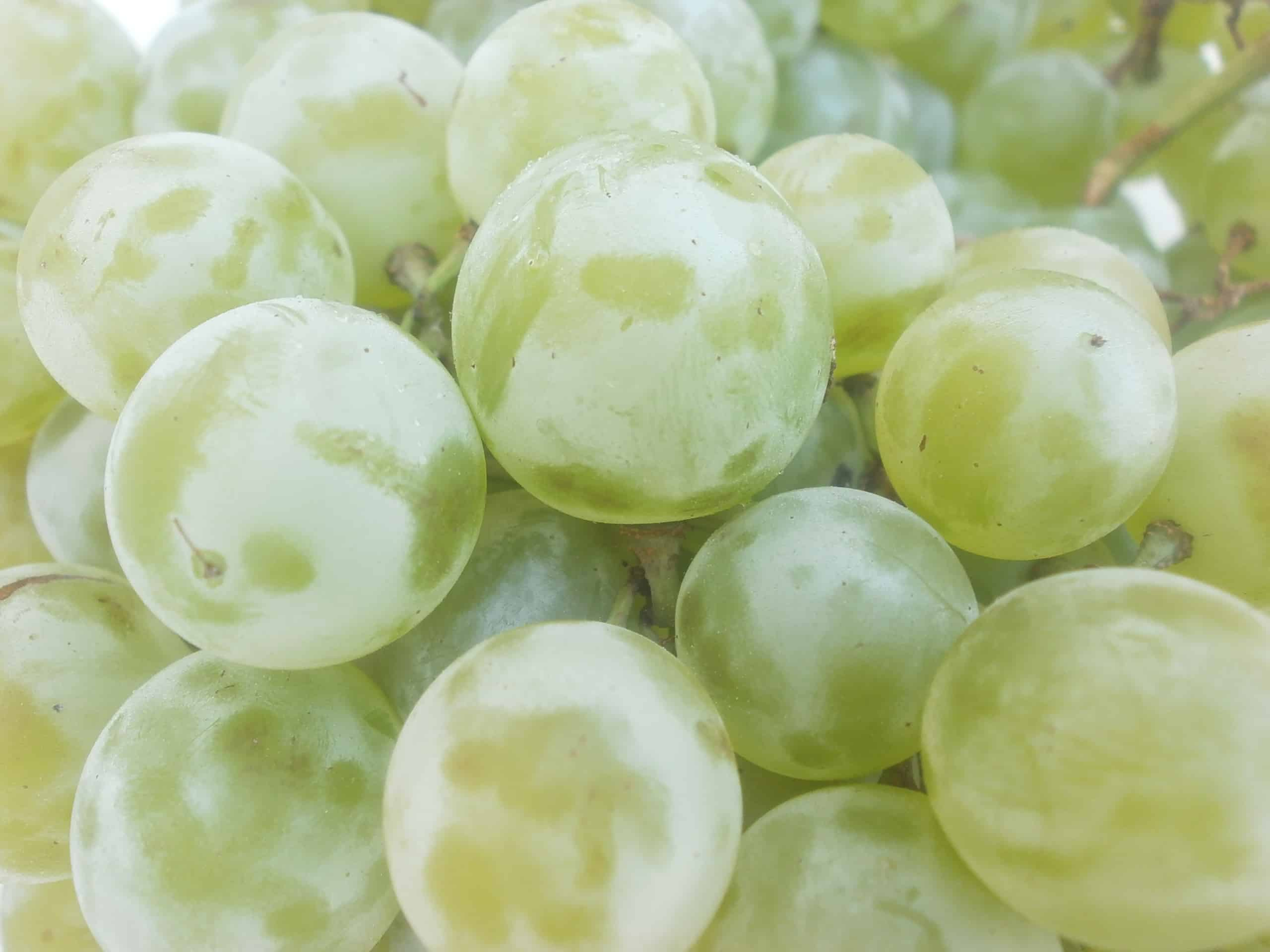 Marquis Grapes