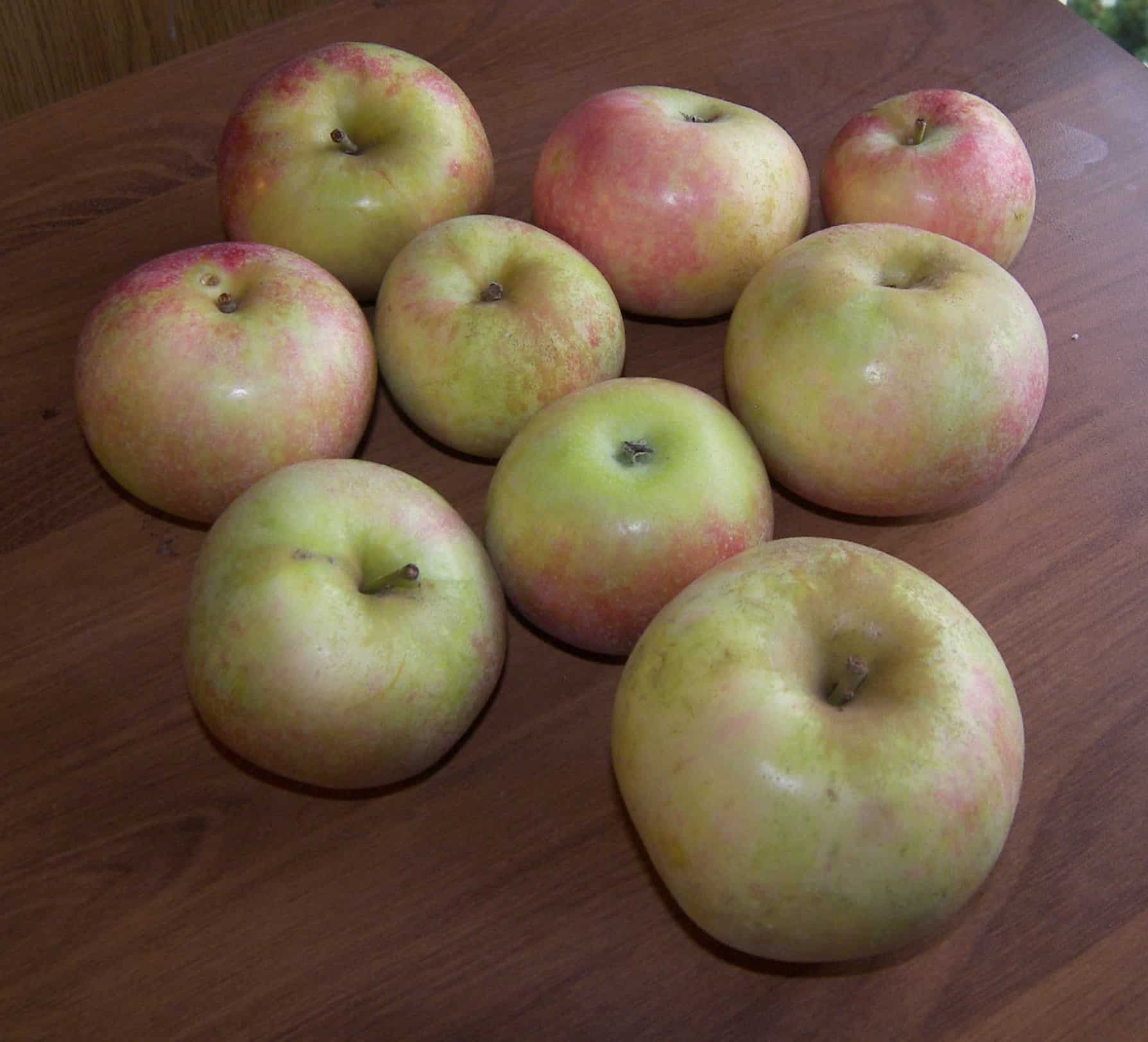 Green Apple Varieties http://www.eatlikenoone.com/red-astrachan-apple.htm