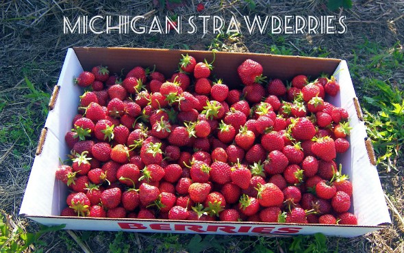 Michigan Strawberries 2013