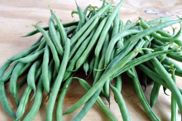 Growing Cannellini Beans
