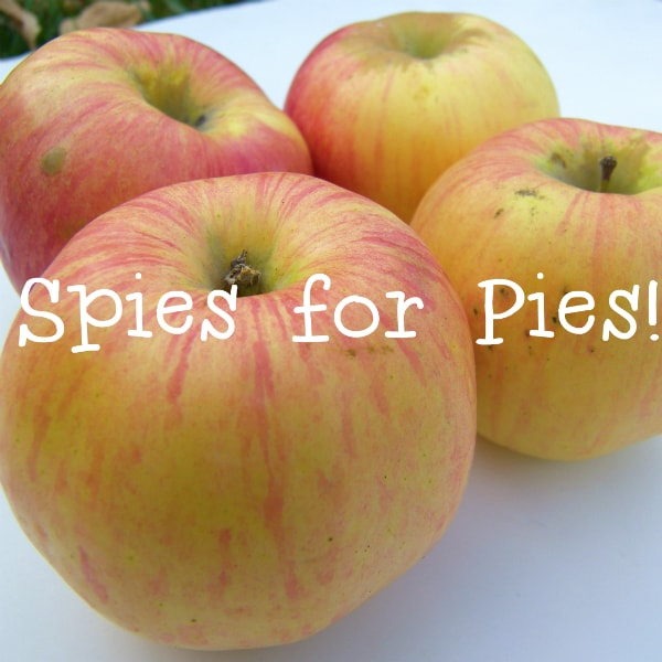 Where to Find Northern Spy Apples Michigan