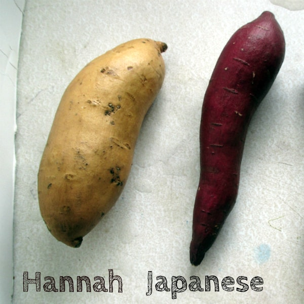 Different Sweet Potatoes