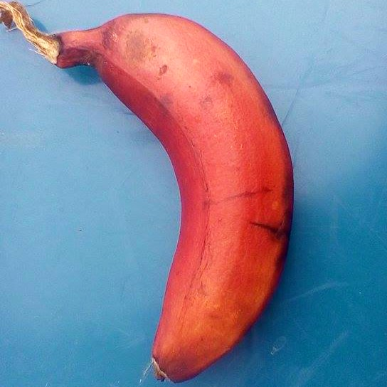 red banana up close