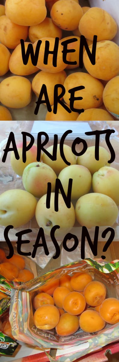 When are Apricots in Season