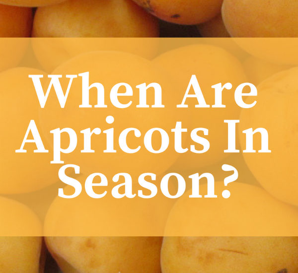 When are Apricots in Season? When Does Apricot Season Begin and End?