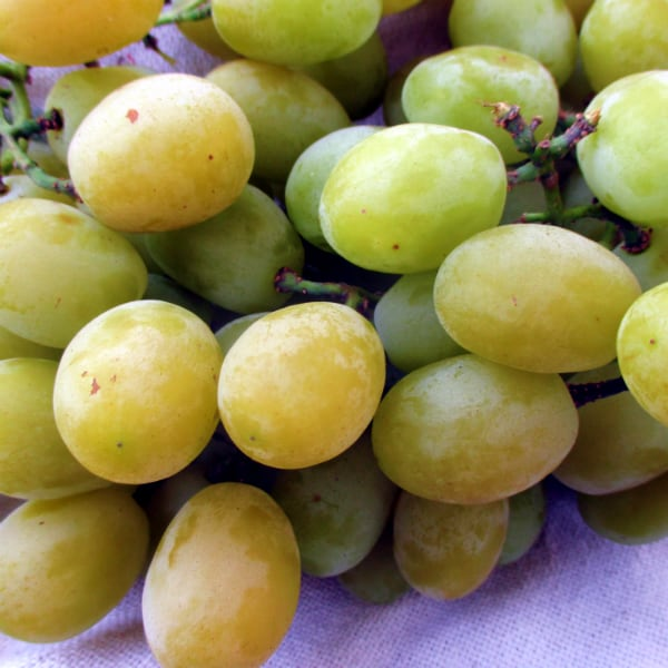 Cotton Candy Grapes Up Close 2015