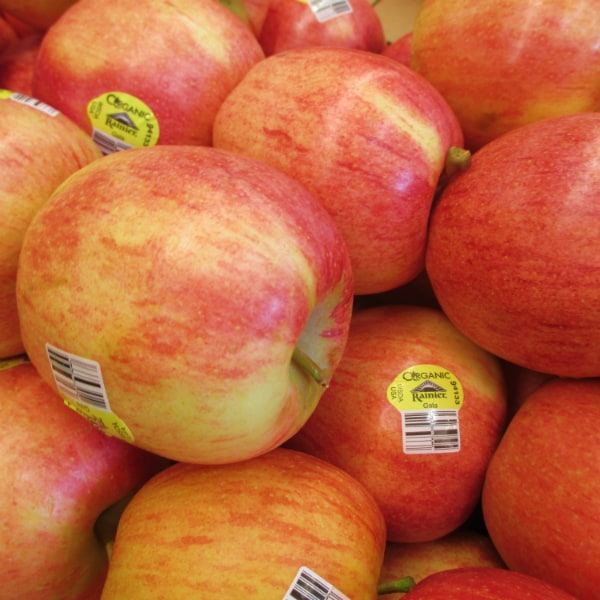 When are Gala Apples in Season