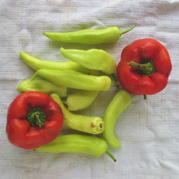 Peppers for Tomato Sauce