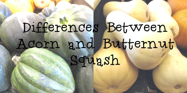 Differences Between Butternut and Acorn Squash