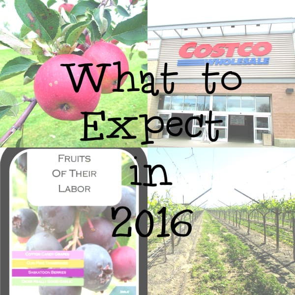 What to Expect 2016