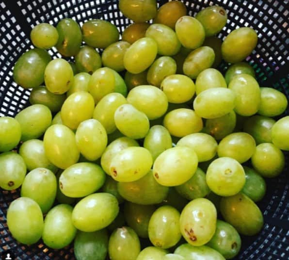 Freshly rinsed off grapes, ready to be enjoyed. Photo courtesy of Instagram user hwarthen.