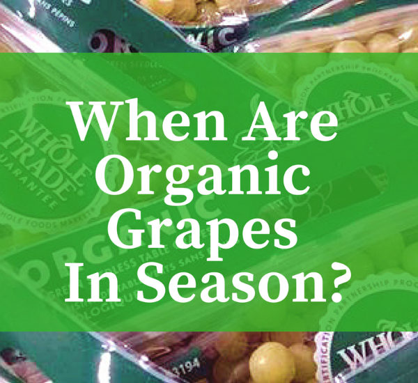 When are Organic Grapes in Season? When does Organic Grape Season begin and end