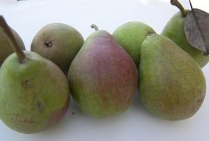 Clapps Favroite Pears