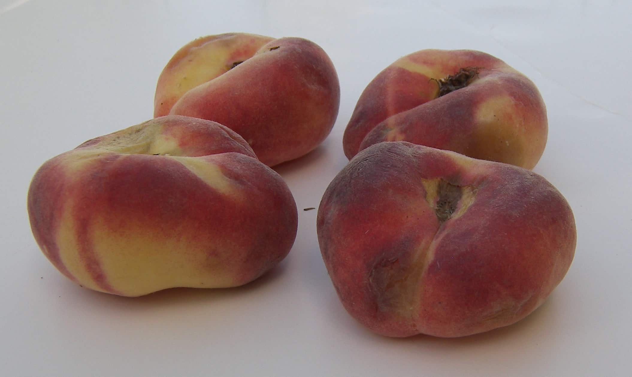 Galaxy Donut Peaches Eat Like No One Else