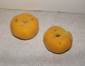 Harvest Moon Donut Peaches