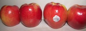 SweeTango Apples 2