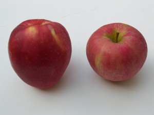 SweeTango versus Honeycrisp