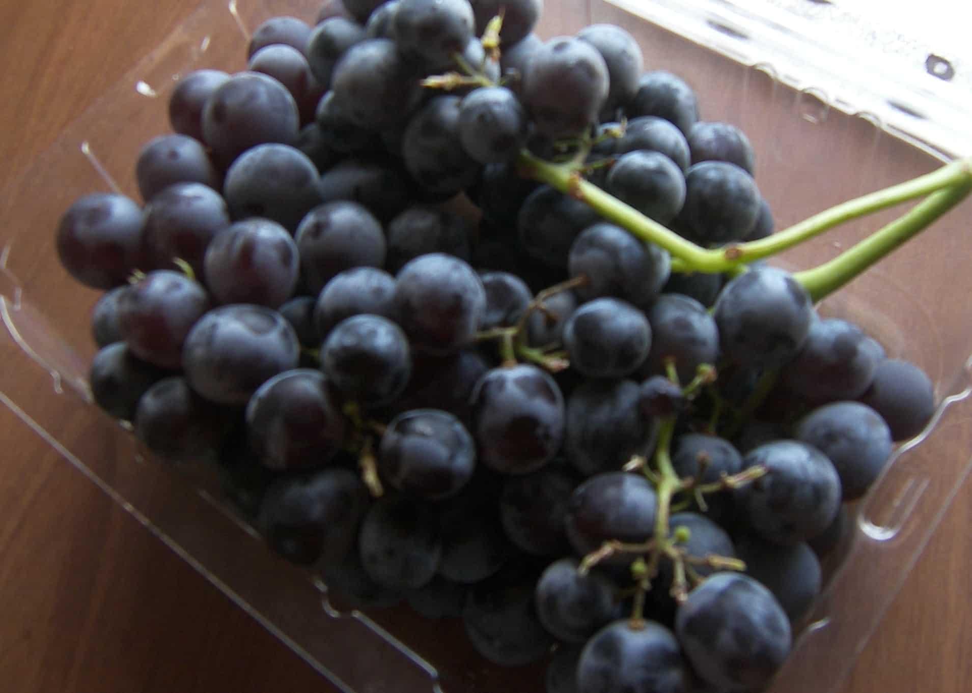the best tasting grape varieties u2013 plant them in your yard u2013 eat