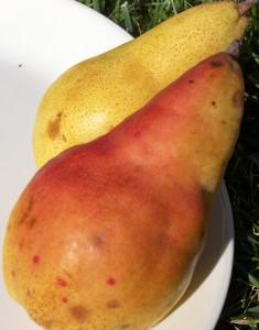 Spartlett Pears