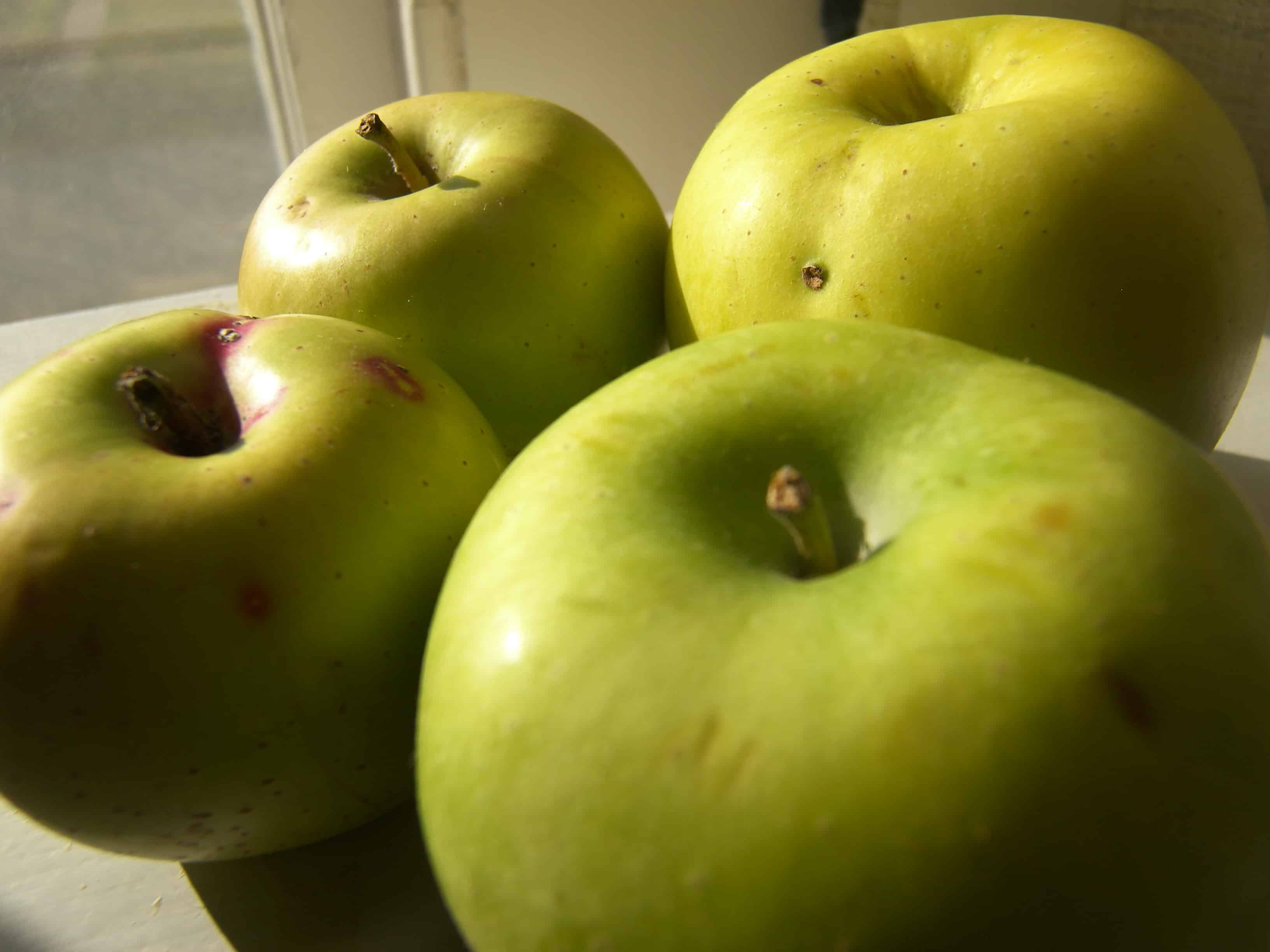 Rhode Island Greening Apples