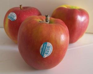 Spitzenberg Apple