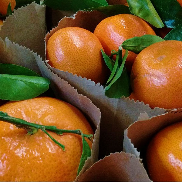 A close up look of a bag of Murcott mandarins with the leaves still attached to some of the fruit.