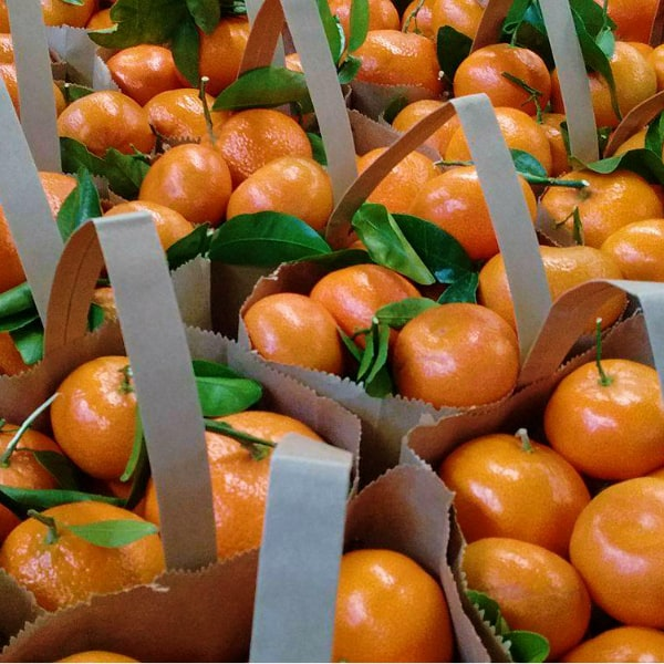 Paper bags full of Murcott mandarins with some leaves still attached to some of the fruit.