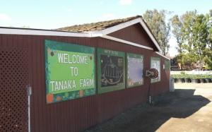 Tanaka Farms 1