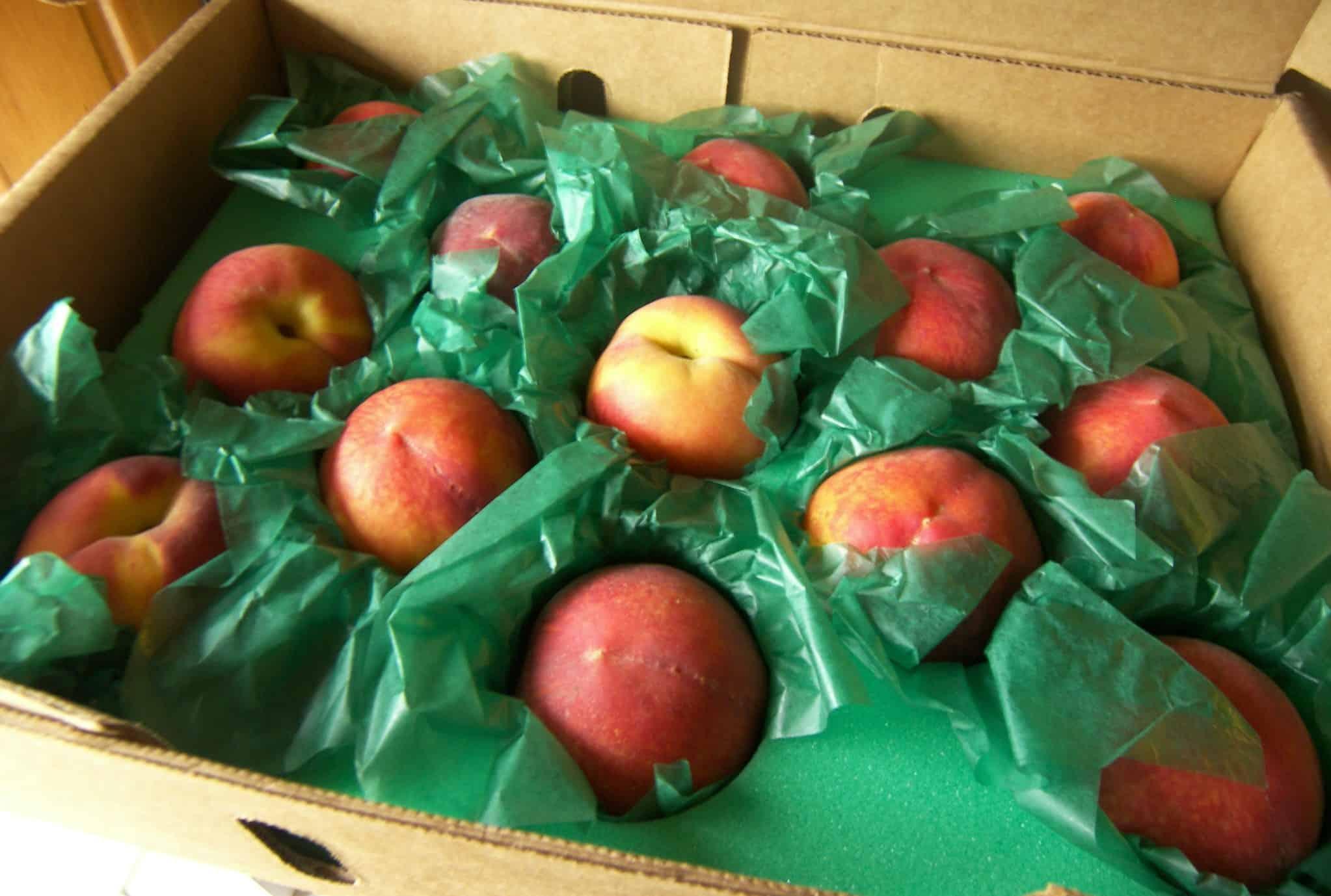 GaLa Peaches