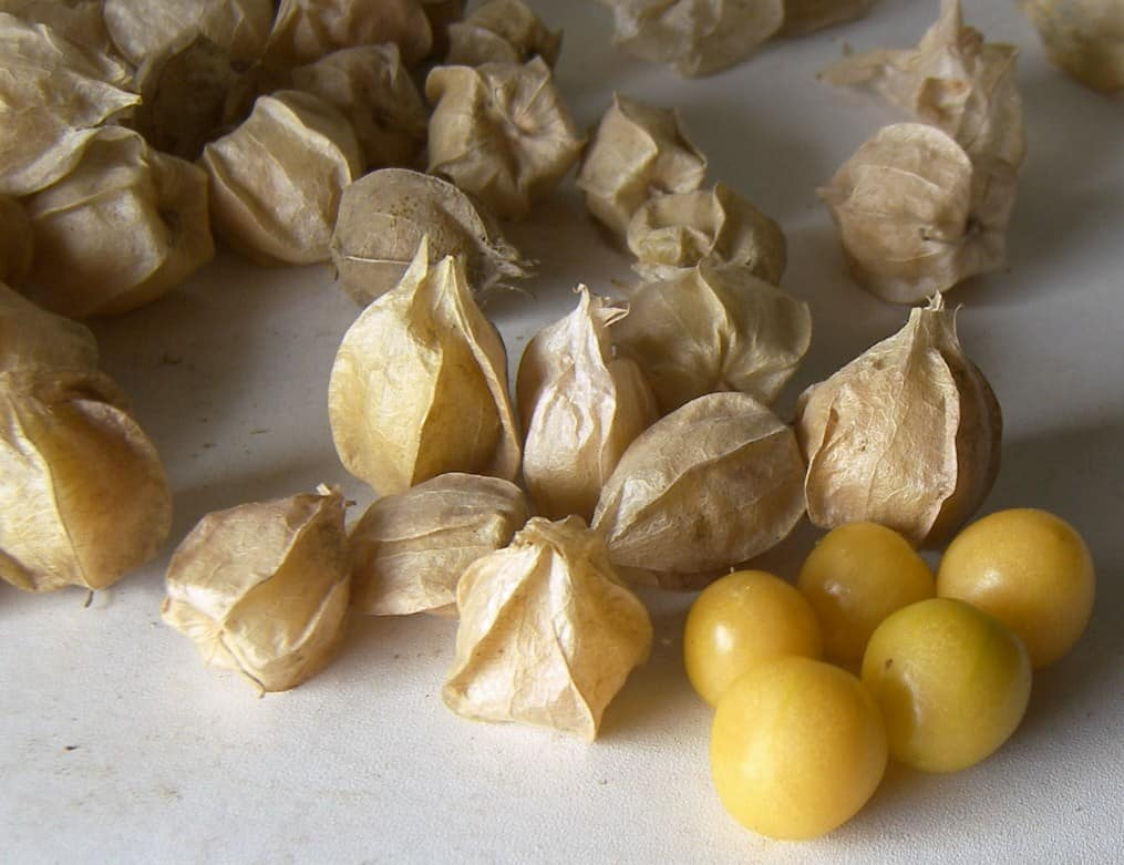 Ground cherries sitting on a countertop. Some of the fruit are still in the husk while others have been removed and place on the right side.