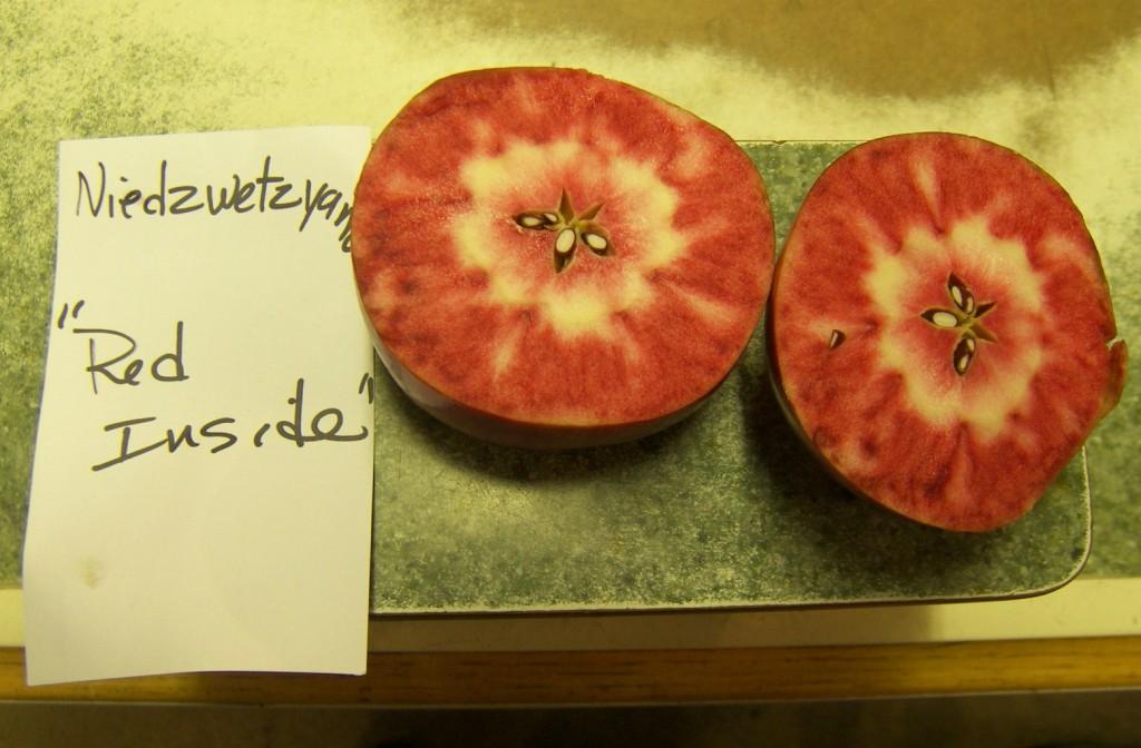 Niedzwetzyana apple that is red inside is cut open