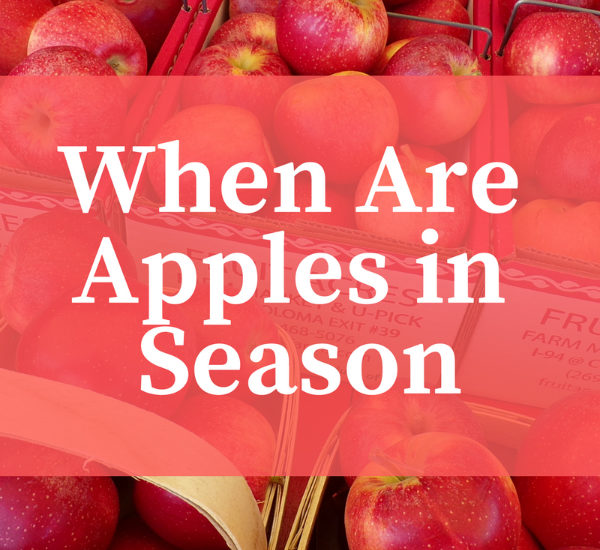 When are Apples in Season