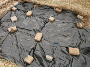 How to Warm Up Your Soil with Garbage Bags