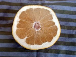 Melogold – A Pummelo (Pomelo) & Grapefruit Hybrid