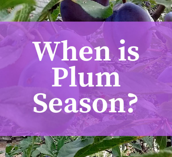 When is Plum Season?
