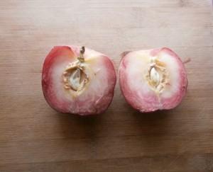 Snow Angel White Peach Variety