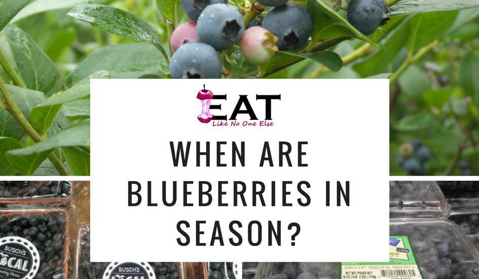 When are Blueberries in Season Collage