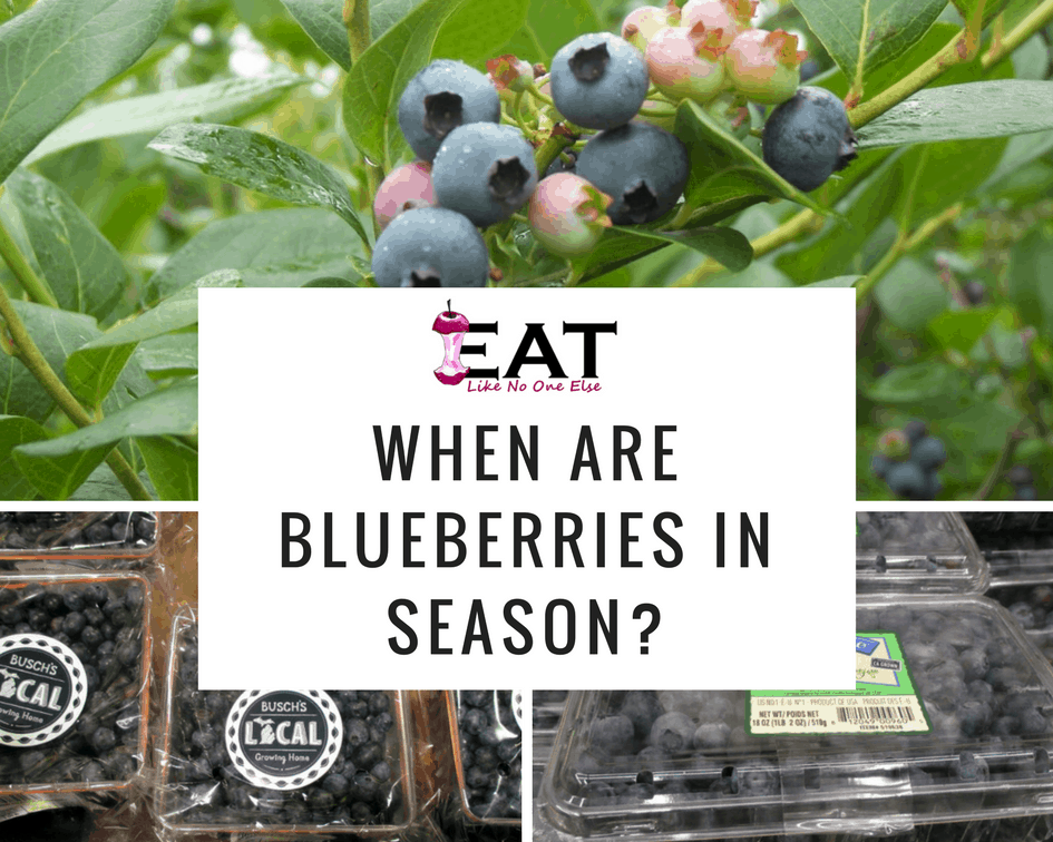 When Is Blueberry Picking in Your State?