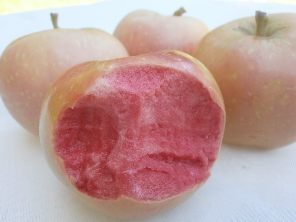 Pink Pearl apples with a bite taken out of one in front