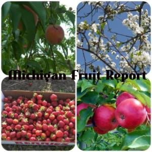 Michigan Fruit Crop Frost Report 2013