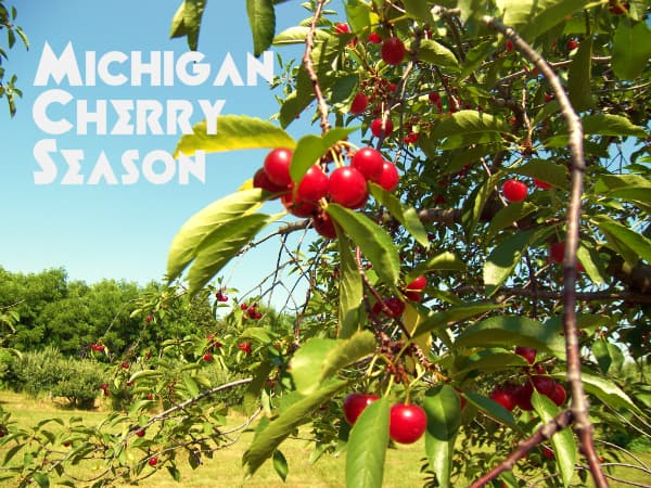 Michigan Cherry Season