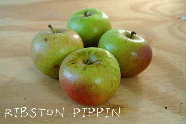 Ribston Pippin