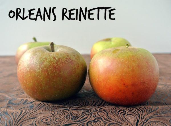Orleans Reinette