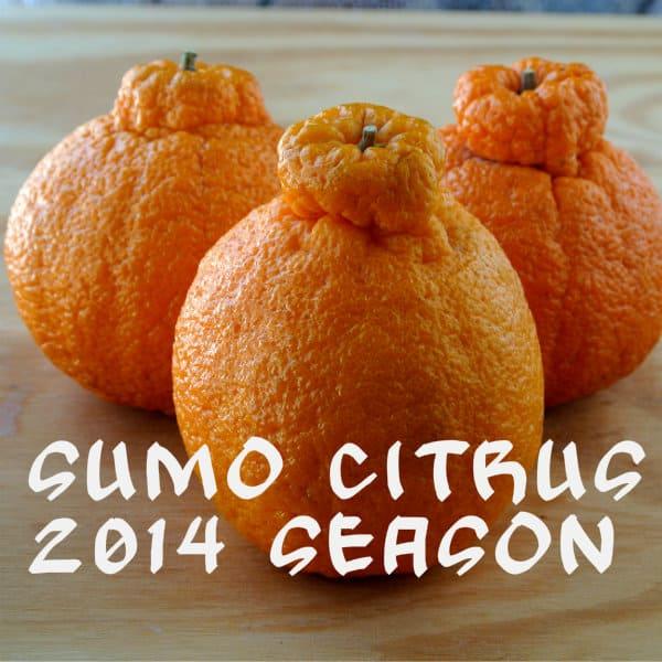 2014 Sumo Citrus Crop
