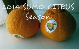 Sumo CItrus 2014 Season