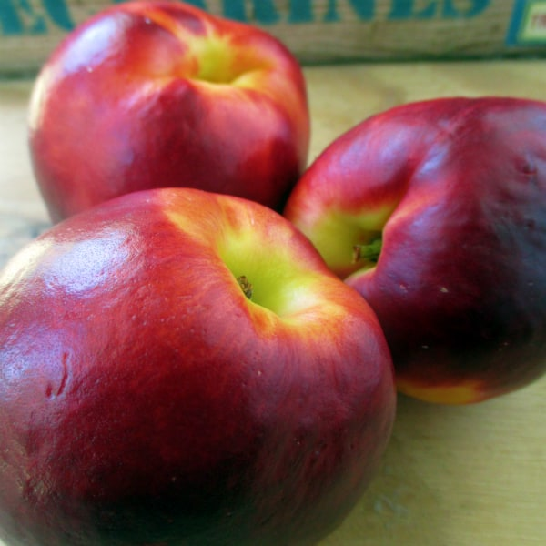 Honey Fire Nectarines