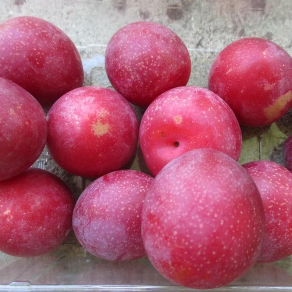 CherriYum Cherry Plums