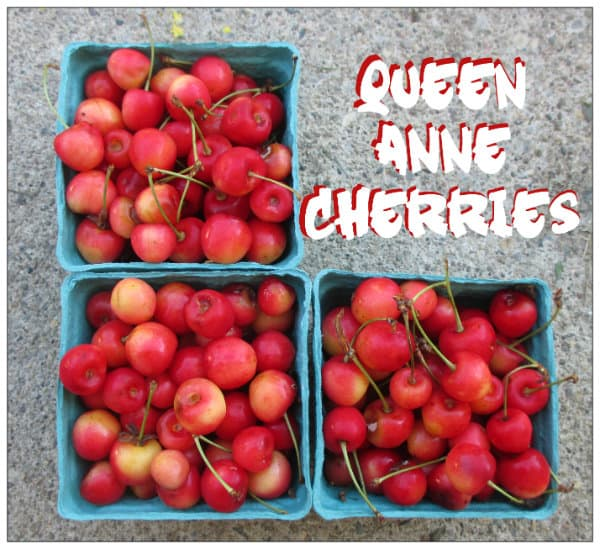 Queen Anne Cherries Royal Anne Cherries