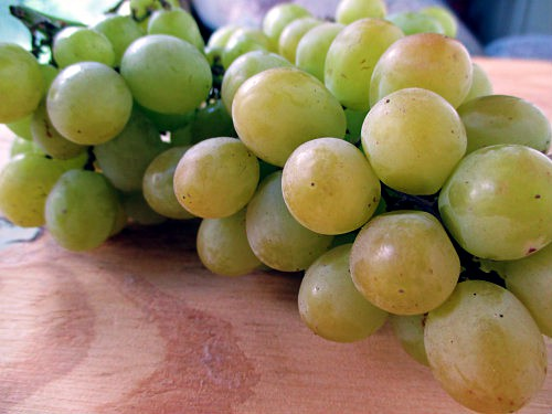Cotton Candy Grapes Up Close