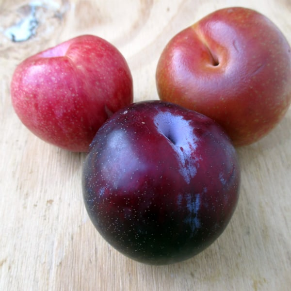 How to Eat a Pluot